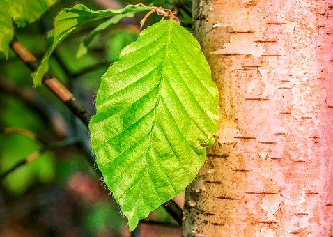 leaf-3347680__340